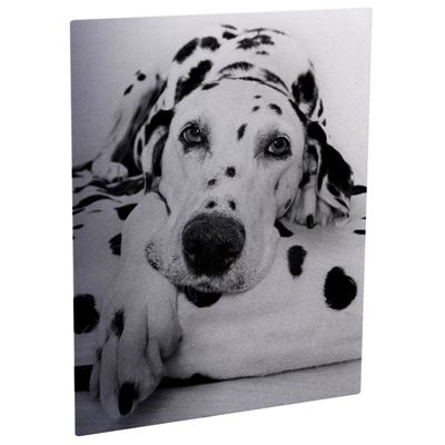 Picture of ChromaLuxe Aluminum Photo Panels Clear Matte - 11in x 14in (10-Panels)